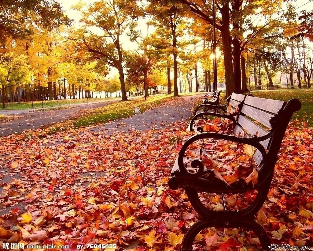 枫叶风景动态图片